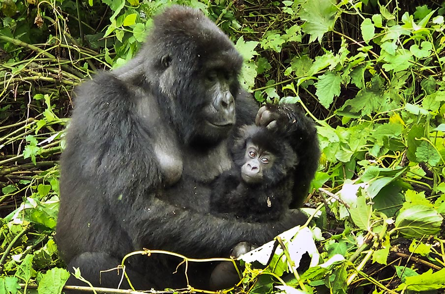 Visit Virunga National Park Congo