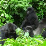 Kenya Tours and Congo Gorilla Trek